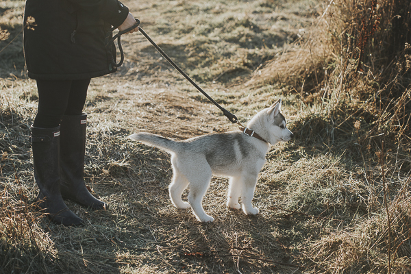 puppy and woman out for walk, lifestyle pet photographer