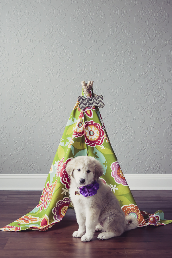 cute fluffy puppy wearing purple flower collar, floral pet teepee,