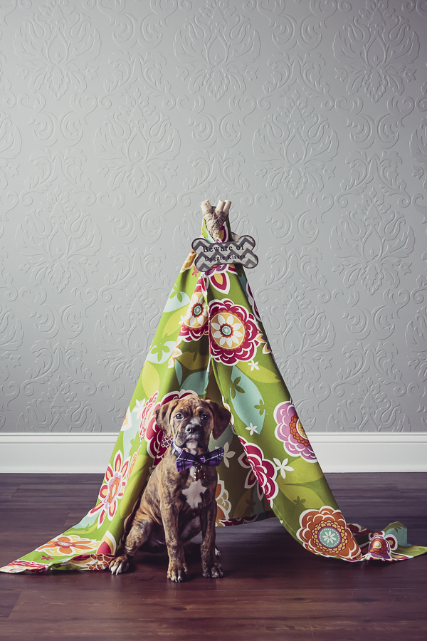 brindle boxer puppy in front of floral teepee, studio pet photography