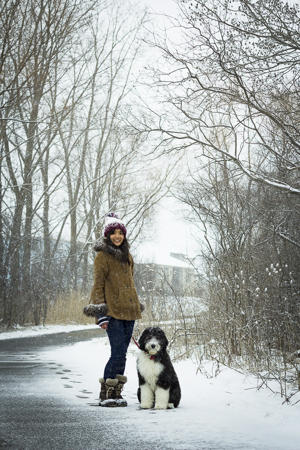 winter dog portraits, woman's best friend, Sheepdog mix