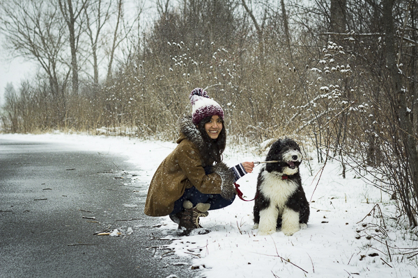 Sheepdog mix, Sheepadoodle in snow, winter dog photography