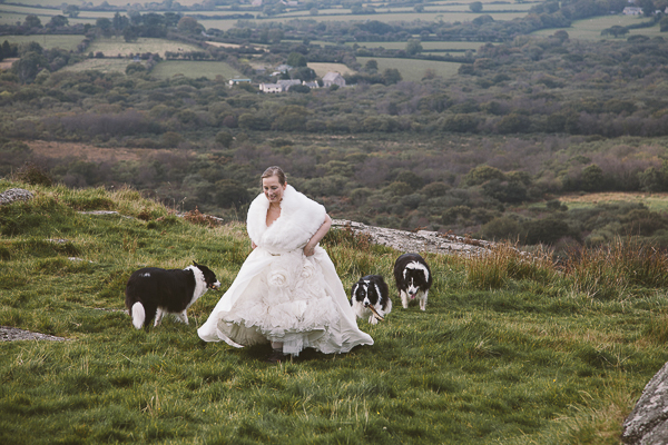 bride and border collies walking up hill, Cornwall, UK