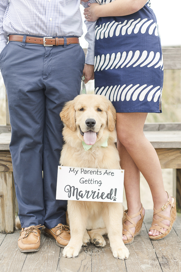 "dog wearing ""my parents are getting married sign,"" ©Anna Grace Photography 