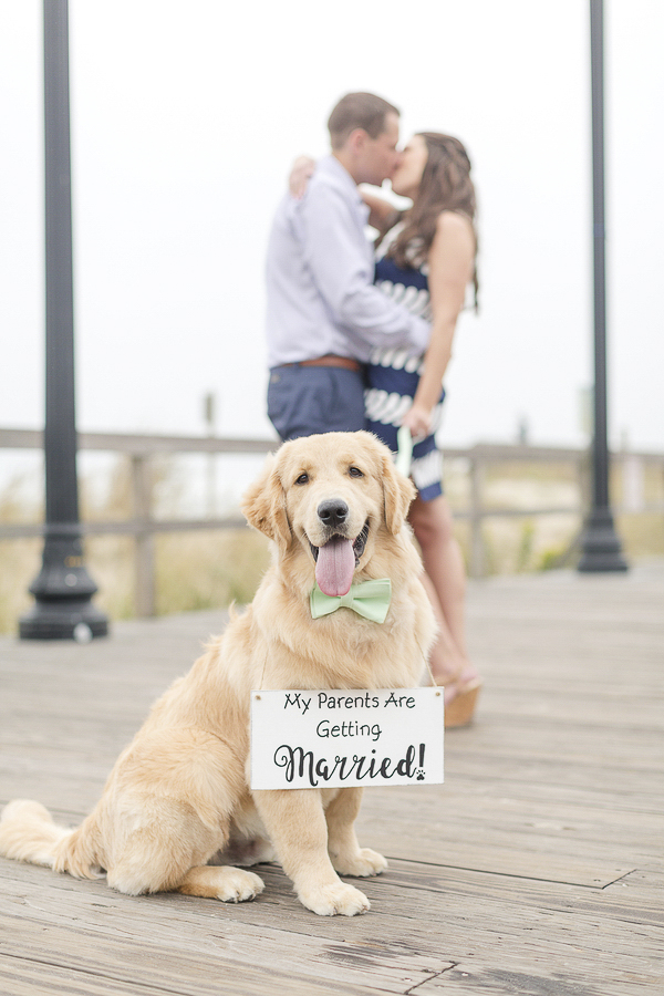 Golden Retriever wearing bow tie and sign, engagement photos on boardwalk ©Anna Grace Photography, Bethany Beach, DE