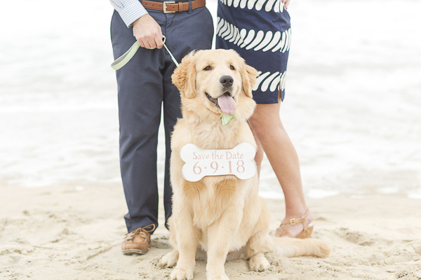 Golden Retriever puppy wearing Save the Date sign, beach engagement photos with dog ©Anna Grace Photography