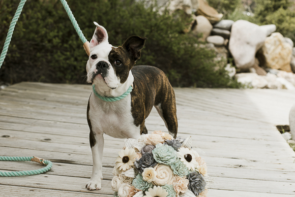 Mixed breed wearing green rope leash and collar, wedding bouquet, ©Elements of Light Photography