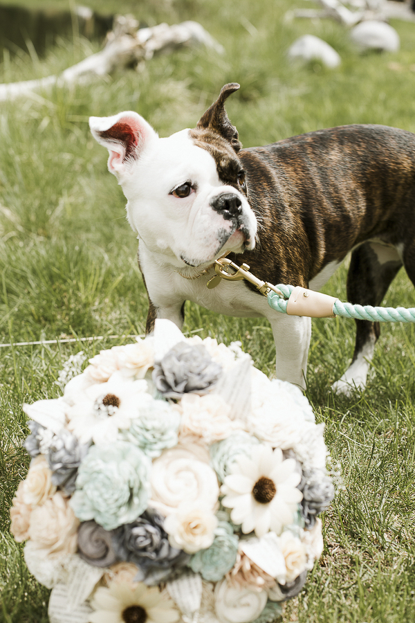 Bulldog mix and bouquet, dog of honor, wedding dog ©Elements of Light Photography