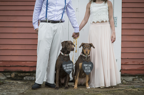 engagement portraits with dogs wearing save the date signs, mixed breeds, New Milford engagement photography with dogs
