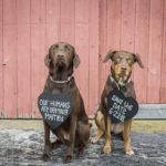 Engaging Tails:  Stella the Lab Mix and Zoey the Kelpie Mix