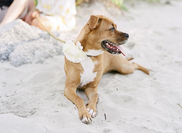 Boxer-Lab mix wearing floral collar on the beach, ©Rachel Craig Photography, Charleston, SC