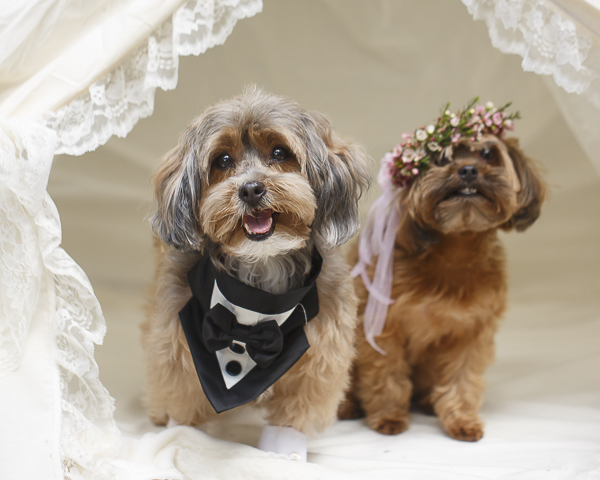 Best (Wedding) Dogs:  Coco's and Truffles' Dog Wedding