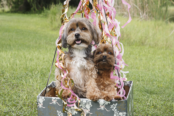 little dogs in wedding balloon, styled shoot dog wedding