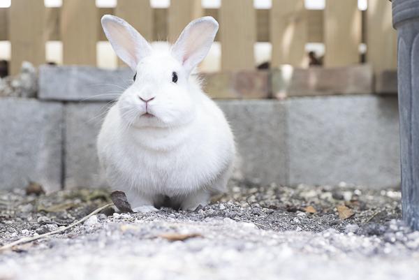 adorable white rabbit