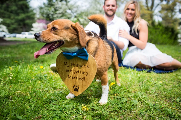 including pets in engagement photos, Beagle mix wearing wood sign