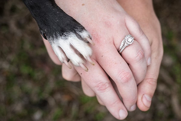 paw and hands, engagement photos with dog