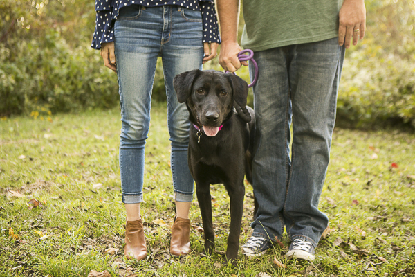 Happy Tails:  Moxie the Lab Mix
