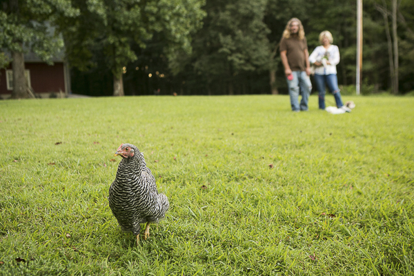 pet chicken in front yard, ©Mandy Whitley Photography | lifestyle pet photography