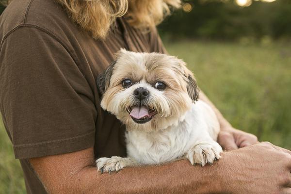 adorable Ewok dog, Shih Tzu mix, ©Mandy Whitley Photography | lifestyle pet portraits