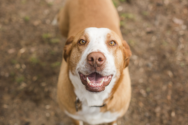 Adoptable Hound mix via A Forever Home Rescue Foundation, Photos by Megan Rei Photography