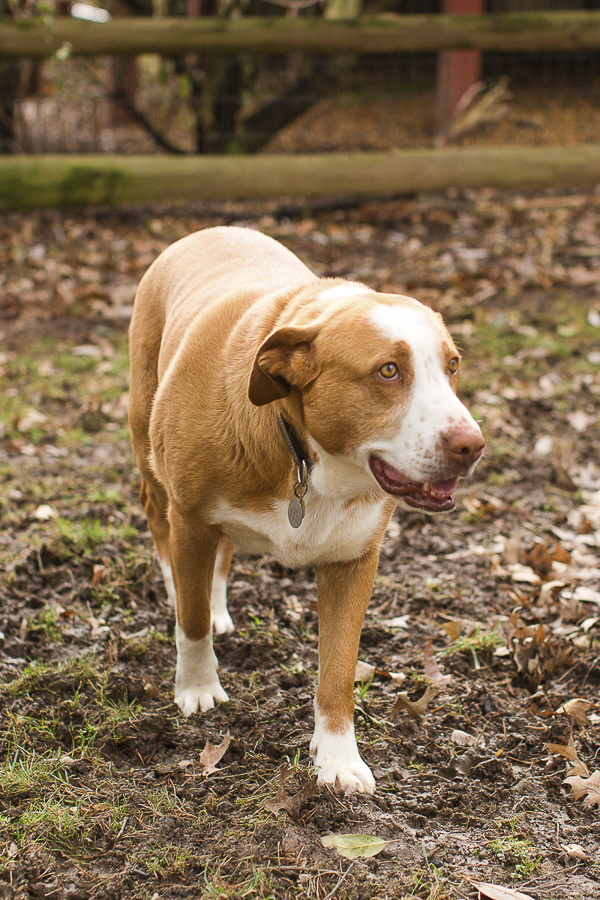Hound Mix looking for forever home | ©Megan Rei Photography | Adoptable dogs A Forever Home Rescue Foundation