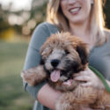 lifestyle engagement pictures with Wheaten Terrier puppy