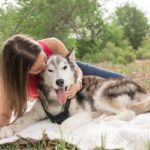 In Loving Memory: Juneau the Siberian Husky