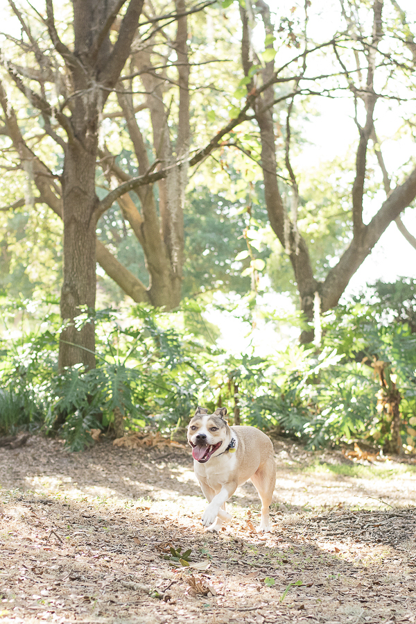 happy mixed breed running on trail, Central Florida lifestyle dog photography