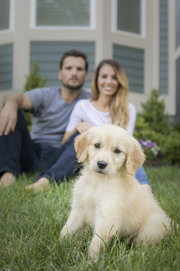 family portraits with Golden Retriever puppy, dogs are family