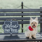 "Yorkshire Terrier on park bench with ""I Loved Her First"" sign, ©M Harris Studios 
