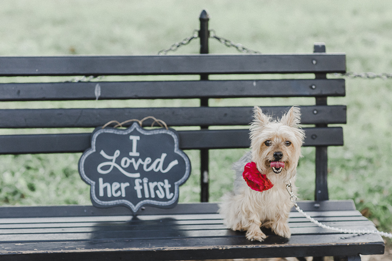 """Yorkshire Terrier on park bench with """"I Loved Her First"""" sign, ©M Harris Studios 