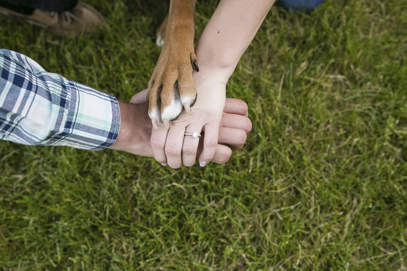 Hands and paw, engagement ring and dog's paw