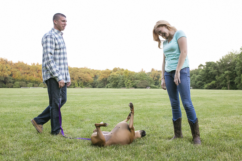 dog rolling on grass, summer engagement session with dog, ©Moments By Melanie | engagement photos with Boxer
