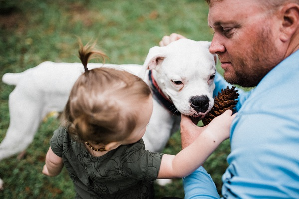dad looking at toddler daughter playing with Boxer, end of life session with dog with canine cancer