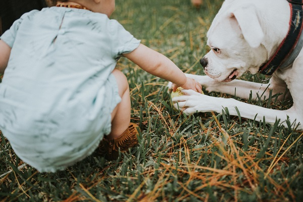 little girl taking ball away from gentle dog, ©Love Mary Beth Photography | Panama City, documentary dog photographer