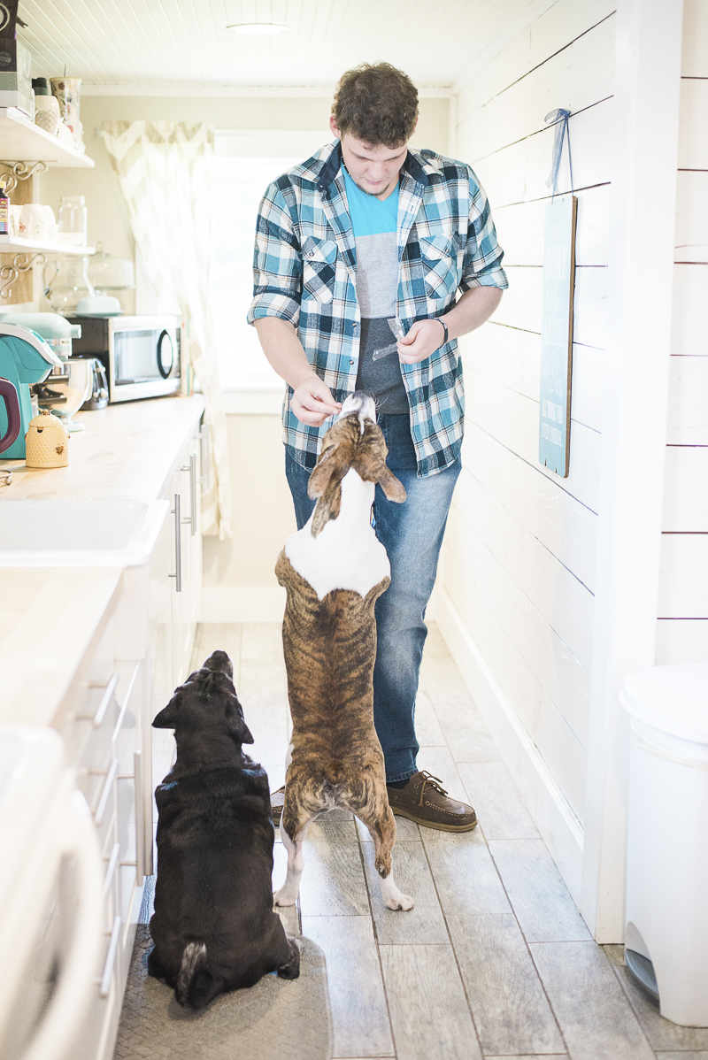 lifestyle dog portraits, dogs getting treats, ©Laurie Jean Photography