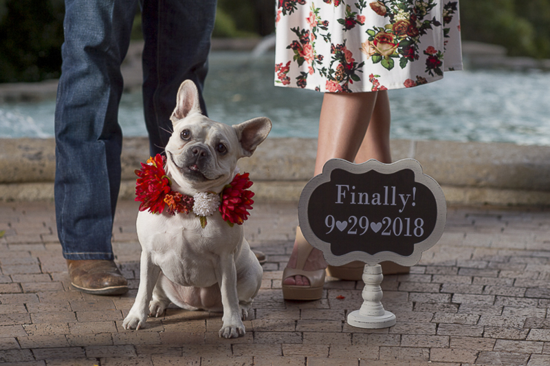 French Bulldog wearing flower collar, San Antonio engagement photos ©Ata-Girl Photography
