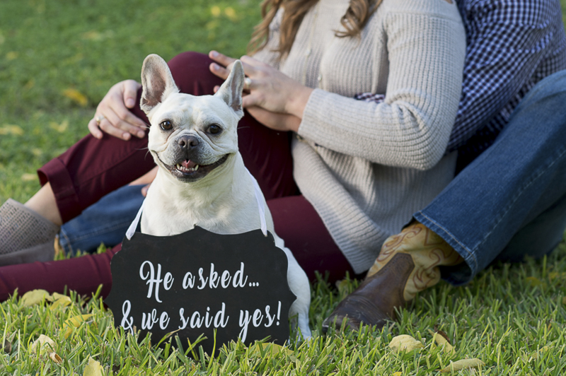 Save the Date Sign with a French Bulldog | ©Ata-Girl Photography | dog friendly engagement session