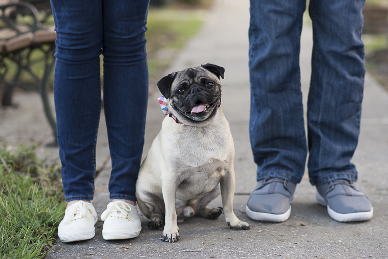 Rescued Pug and his humans. ©Corner House Photography | Central Florida dog friendly engagement session
