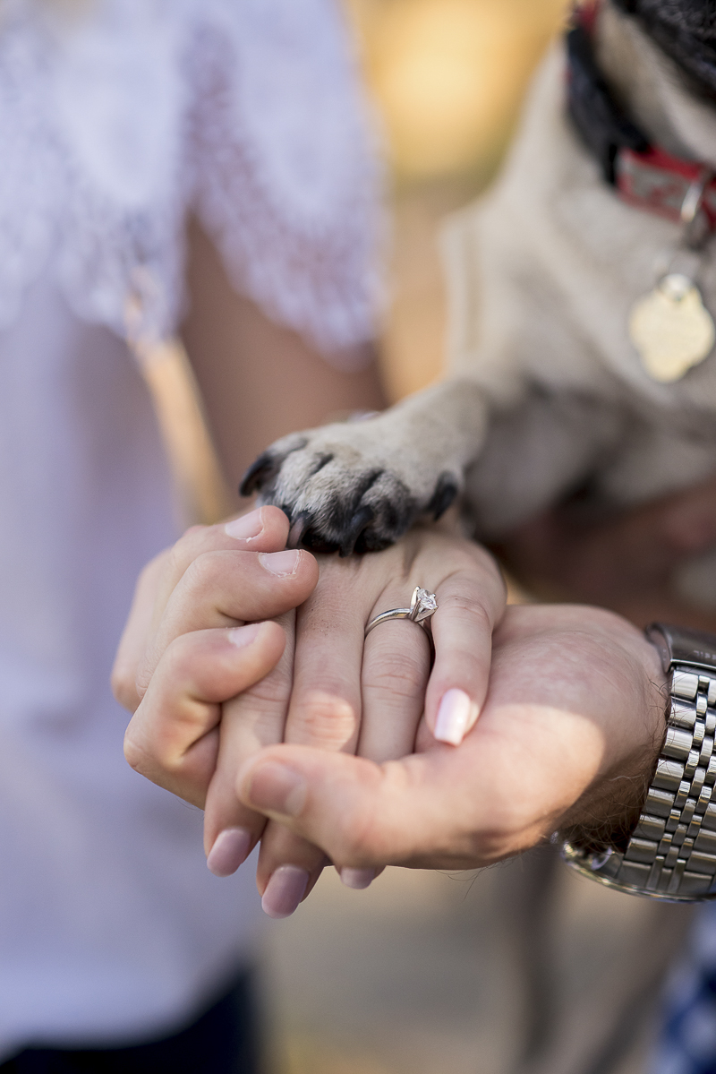 Pug paw, hands, engagement ring, ©Corner House Photography | Central Florida dog friendly engagement session