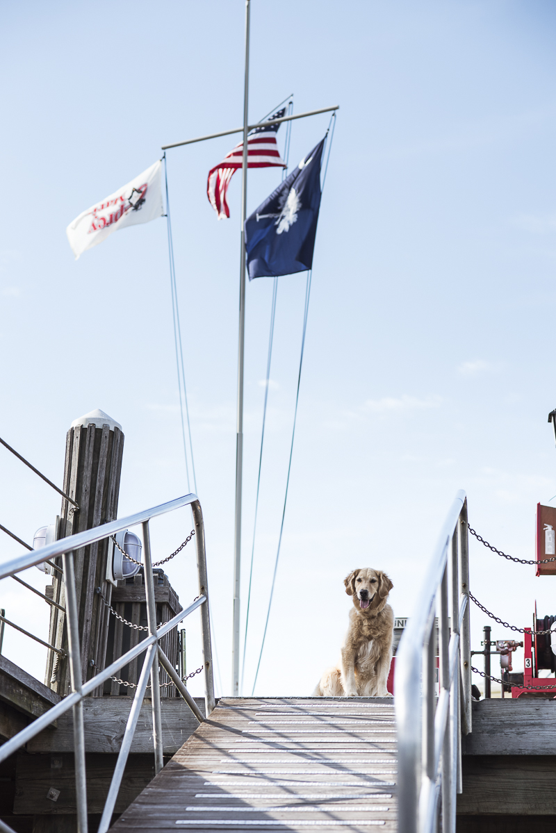 dog sitting at top of ramp at marina, boat dog, ©Alice G Patterson Photography