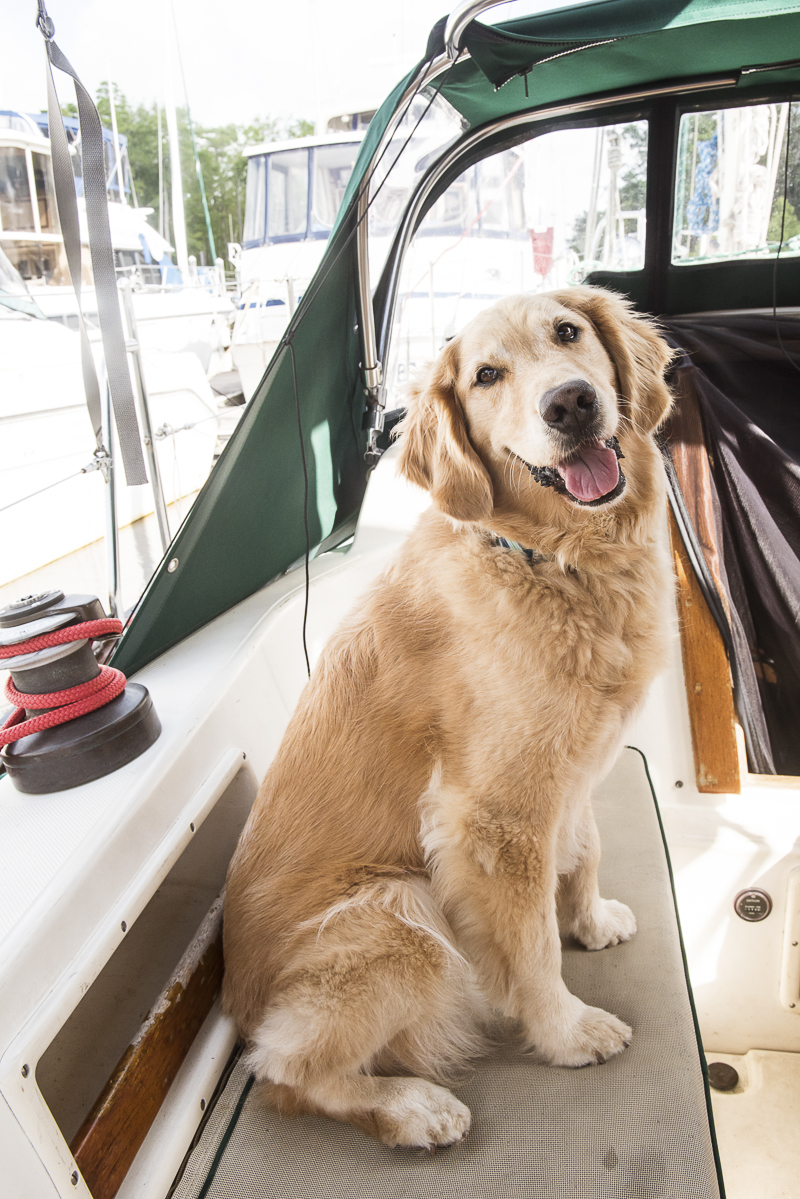 life of a boat dog, ©Alice G Patterson Photography   lifestyle dog photographer