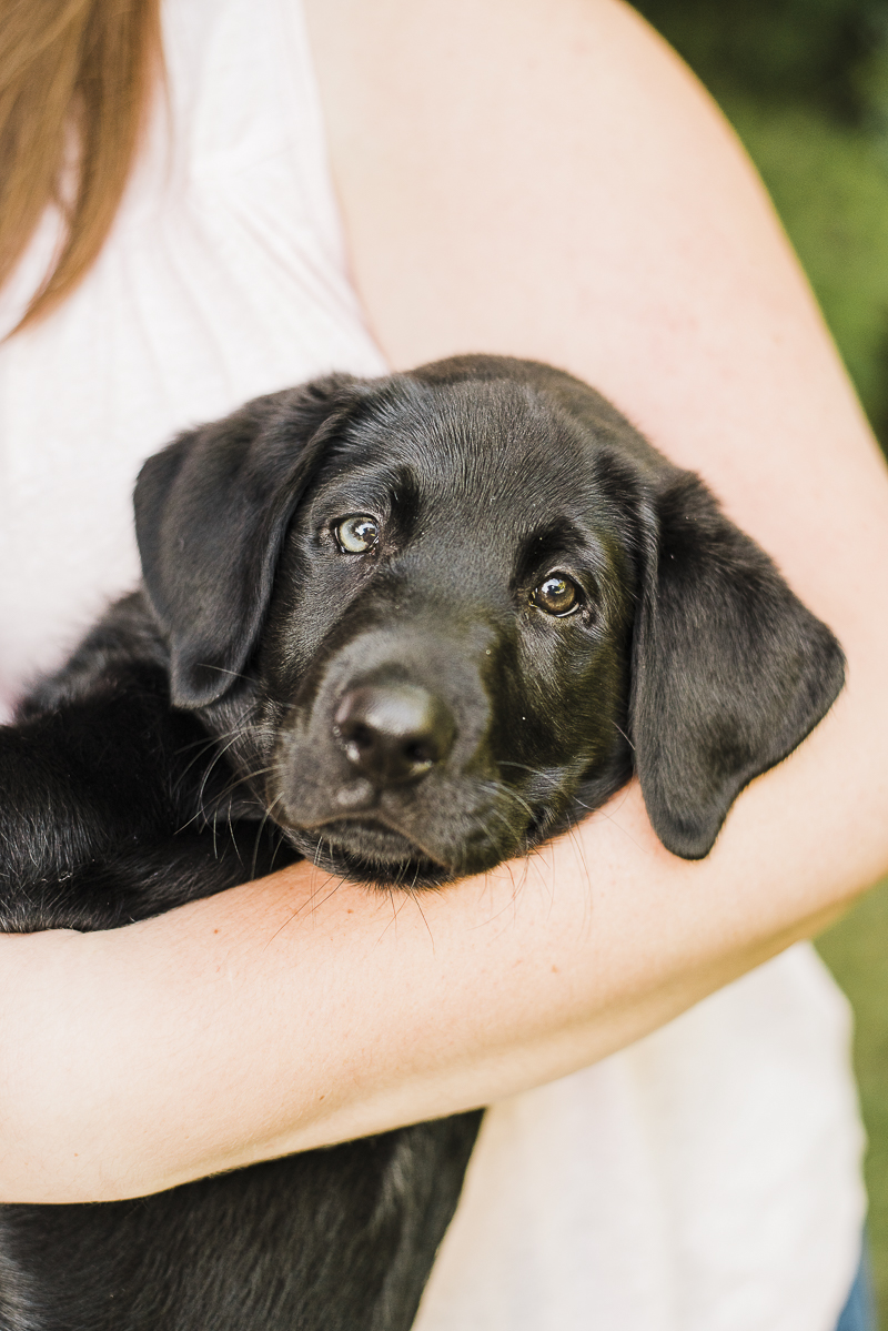 ©Emily Marie Photography, heterochromia, puppy with two different colored eyes, black Lab