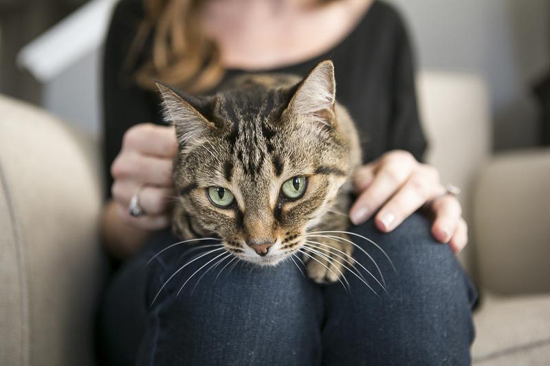tabby cat on woman's lap, lifestyle cat photography ideas, ©Mandy Whitley Photography   Nashville pet photographer