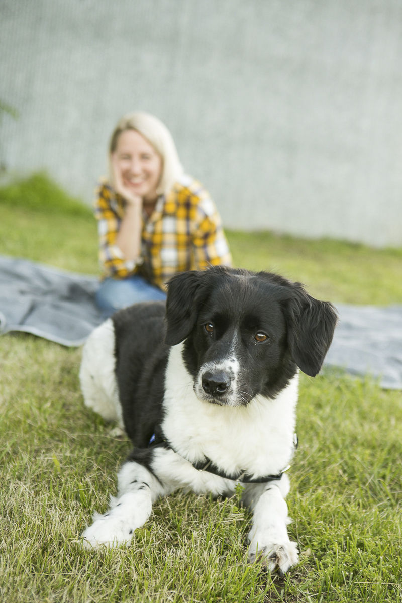 Border Collie mix, modern dog photography ©Mandy Whitley Photography | Nashville pet photographer