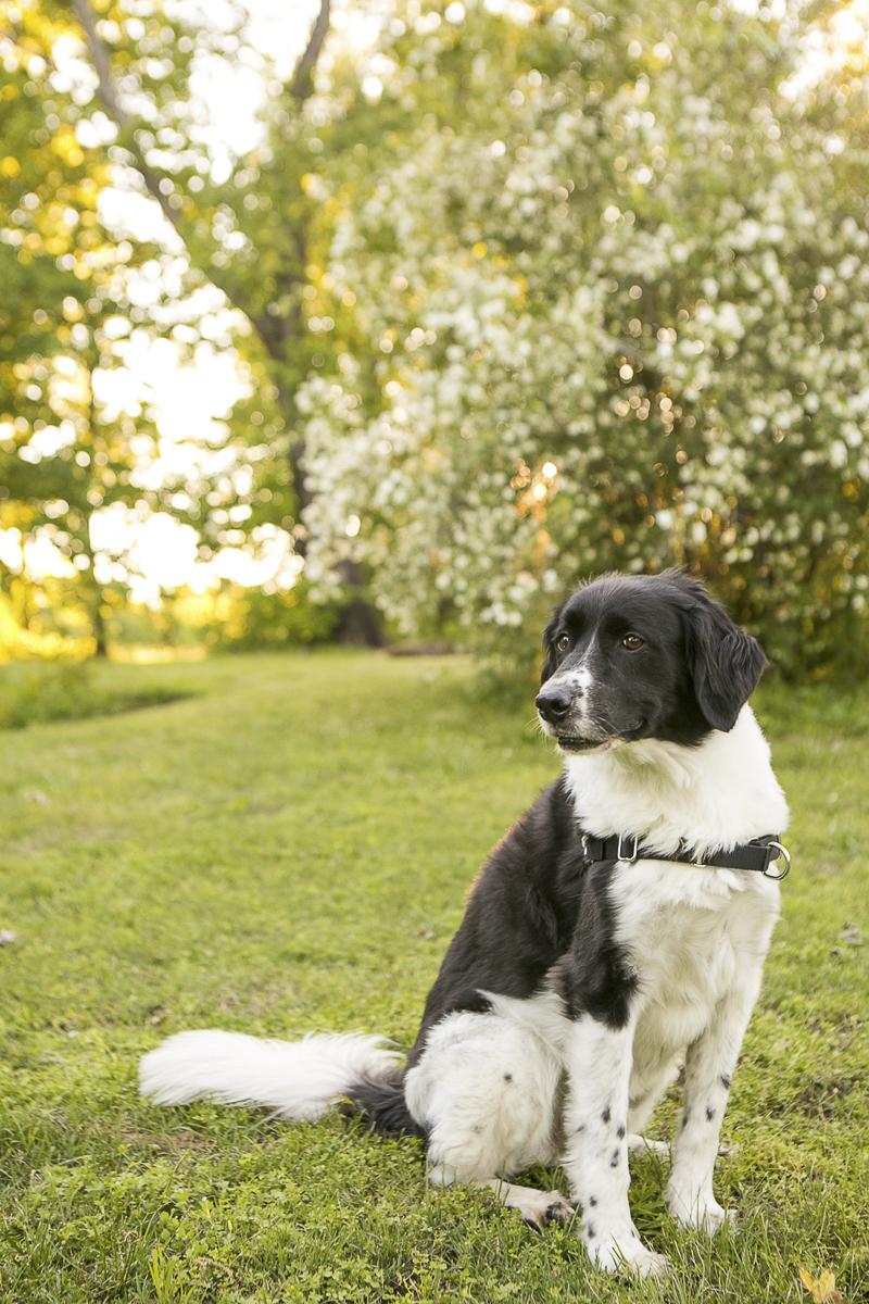 """mischievous mixed breed, """"hamburgler"""" dog ©Mandy Whitley Photography   Nashville dog photographer"""