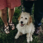 Puppy Love:   Ellie the Goldendoodle (& a Puppy Proposal)
