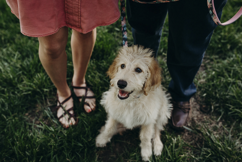 Goldendoodle, puppy proposal | ©Mikela Wendel Photography