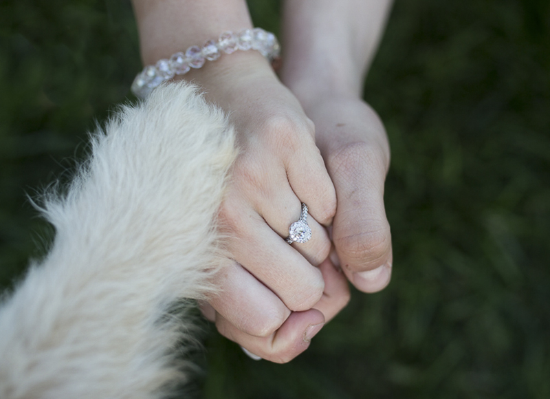 puppy proposal, paws, hands, engagement ring
