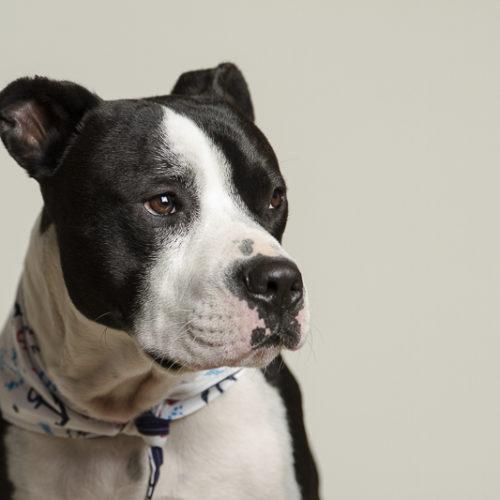 Pawsitively Amazing: Halligan (Emotional Support Dog)