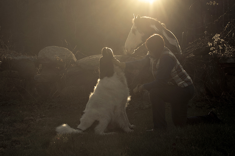 Newf, horse and woman, bond between humans and pets, ©Petcha Photography | Honor Life Sessions